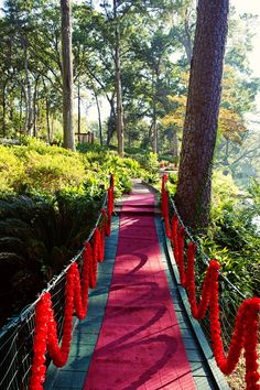 red carpet and garland swagged walkway for wedding ceremony