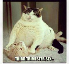 Third trimester sex