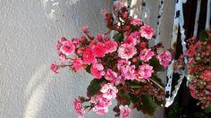Inverno florido