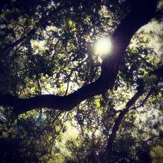 #shade #tree #light #leafs #ignation #hashtagrevolution #picoftheday #photooftheday #instagram #statigram #Instamood #instagood #webstagram #tx_ignation #bestoftheday #igers #igaddict #instahug #instagramers #instagramhub #dslr #jj #ig #lymenlee #instutorial