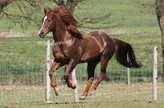 Horse #Horse #foal #stallion #animal #animals #nature #photo #photography #fliiby #images #yyazilim #people #nature