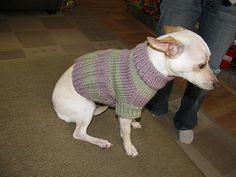 Ravelry: Dog Sweater for Small Dog pattern by Brian Herzog Knitted Dog Sweater Pattern, Dog Coat Pattern, Knit Dog Sweater, Small Dog Coats, Small Dog Sweaters, Cat Sweaters, Knitting Patterns For Dogs, Free Knitting, Crochet Dog Clothes