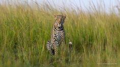 Recent Pictures | David Lloyd Wildlife Photography