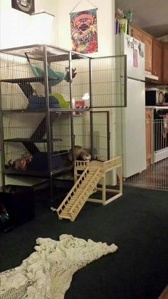 ferret naiton and critter nation stairs Ferrets Care, Cute Ferrets, Cute Rats, Ferret Toys, Pet Ferret, Pet Rat Cages, Pet Cage, Cage Chinchilla, Bunny Cages