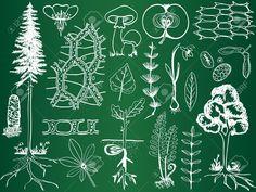 13312699-Biologia-schizzi-di-piante-a-bordo-di-scuola-botanica-a-mano-illustrazione-Archivio-Fotografico.jpg (1300×975)