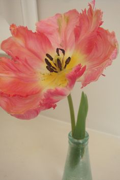Parrot Tulip - I need to plant some of these... so pretty!