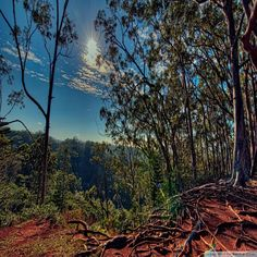 forest in kalauao hawaii hdr