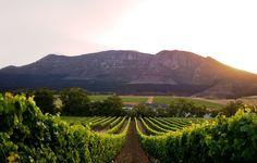 Groot Constantia Wine Estate - Western Cape, South Africa