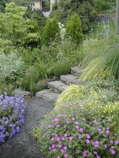 Steps with soft plants/flowers. Need full sun ones for my steps in back...