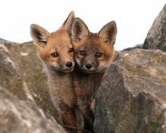 Double Trouble Photo by Mary Lee Agnew — National Geographic Your Shot