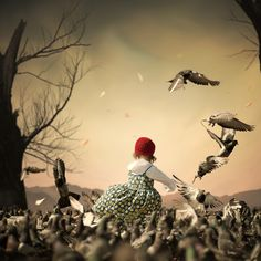 The pigeon storm by Caras Ionut