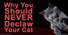 Declawing cats can destroy their quality of life as they use their claw in many ways. An alternative way is to provide a scratching surfaces around your home. http://healthypets.mercola.com/sites/healthypets/archive/2016/03/24/declawing-cats-alternatives.aspx