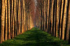trees&trees&trees&trees&trees&trees&trees&trees&trees&trees&trees.