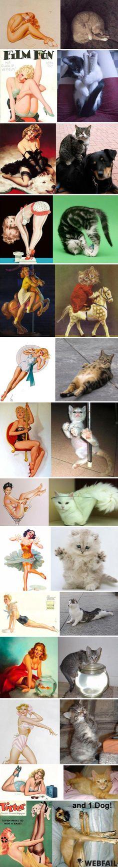 Pin-Up Girls vs. Pin-Up Cats - Win Bild - Webfail