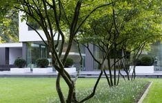 moderne Gartenarchitektur Köln- Villengarten 1 - gartenplus - die gartenarchitekten #smallgardenshrubs #ContemporaryGardenLandscaping