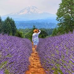 Oregon Lavendar Farm in Mt Hood, 21 miles southeast of Portland. With over 150,000 square feet of indoor space and 90 acres of land, the farm provides an expansive opportunity to explore sustainable and organic agricultural practices. The Oregon Lavender Farm is situated in a district rich in Oregon history.