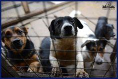 В Госдуме предлагают усыплять собак, которых не забирают из приютов    http://nversia.ru/news/view/id/100508 #Саратов #СаратовLife