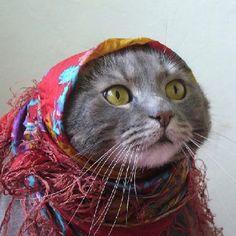 bohemian cat   :)