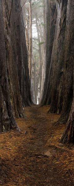 Dark Forest Path | ... ILLUSION MURALS / DS19 - Removable door sticker dark forest path mural