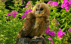 owl and pink flowers