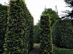 More hedges