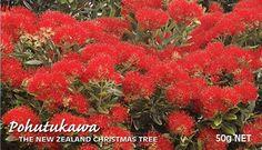 Pohutukawa tree - New Zealand