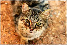 Cat Cats, Photography, Animals, Gatos, Photograph, Animales, Animaux, Fotografie, Photoshoot