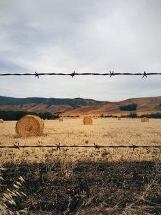 #field #bales #autumn #fall