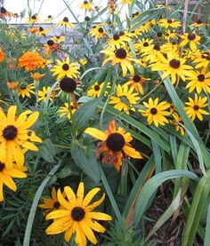 Good Easy Plants: Here are some plants used in Habitat for Humanity landscapes. They are beautiful and super-hardy! Time to garden!