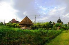 Traditional buildings in the famous coffee growing region of Bali, Kiadan Pelaga , Bali , Indonesia