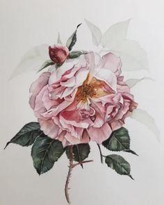 "13.3k Likes, 34 Comments -  Watercolor blog (@watercolor.blog) on Instagram: "" Watercolorist: @evgenyasheglova #waterblog #акварель #aquarelle #drawing #art #artist #artwork…"""