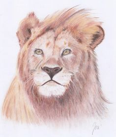Lion in the wind; drawing with pastel pencils on white paper (size Wind Drawing, Pastel Pencils, Pastel Drawing, White Paper, Paper Size, Animal Drawings, A4, Lion, Animals
