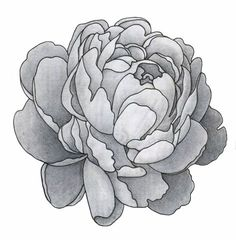 Don't know if it qualifies as a doodle, but neat peonie!