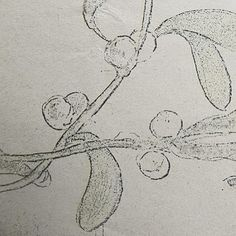 Fragment of an antique illustration of mistletoe Under The Mistletoe, Antique Illustration, Antiques, Instagram Posts, Christmas, Inspiration, Art, Antiquities, Xmas