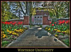 Tip toeing thru Winthrop University's tulips by stevem19, via Flickr