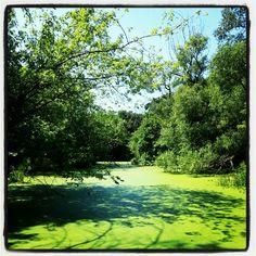 Green Lake, Riverdale Farm, Toronto
