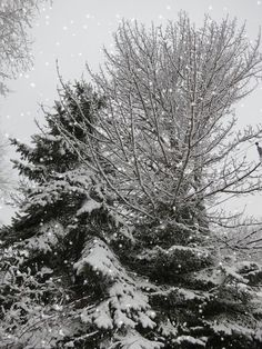 maine snow and magical gif i didn't make