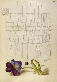", in ""Mira calligraphiae monumenta"", calligrapher: Georg Bocskay (died 1575) in 1561/2, illumination: Joris Hoefnagel (1542-1600) in 1591/6"