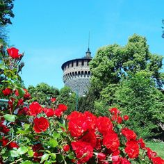 #sempre#milano#castellosforzesco#milanodavedere#milanocityofficial#mymilano#visitmilano#milanogram#instamilano#travel#travelgram#lovemilano#igersmilano#volgomilano#milanolovers#volgoitalia#italy#travels#welovemilano#red#roses#roserosse#travelgram#natureloversgallery#vivomilano#milano_forever by nadiaguara83