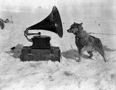 "Dog Chris, listening to the gramophone, during the British Antarctic (""Terra Nova"") Expedition of 1910-1913. Photograph taken by Herbert Ponting, circa January 1911."