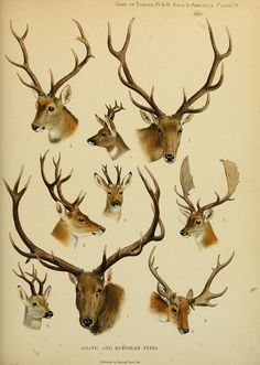 Antlers by BioDivLibrary, via Flickr
