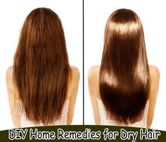 DIY Home Remedies for Dry Hair | Health Villas