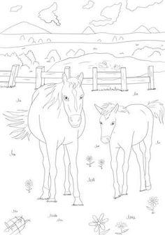 Pferde Ausmalbilder 774 Malvorlage Alle Kostenlos Zum Ausdrucken