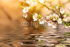 Cherry tree over water