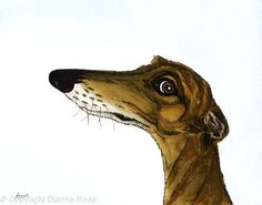 Portrait of a cheeky sighthound