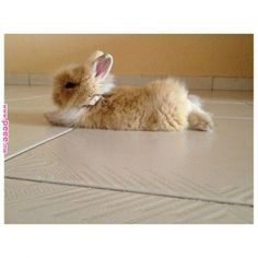 alright somebody just really needs to buy me a bunny. | rabbet | Pinterest | Cute animals, Bunny and Animals