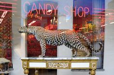 candy panther