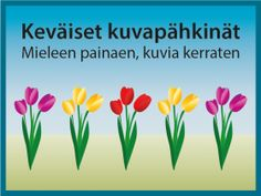 Visailu ja pähkäily Archives - RyhmäRenki