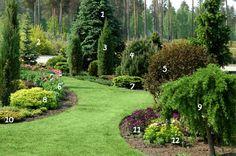 Tree Garden Design Shrubs Ideas For 2019 Evergreen Landscape, Evergreen Garden, Garden Trees, Lawn And Garden, Privacy Landscaping, Home Landscaping, Front Yard Landscaping, Landscape Design, Garden Design
