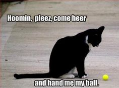 funny-pictures-cat-wants-his-ball